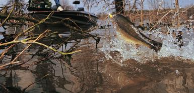 pesca ao achiga