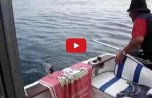 video-pesca-safio