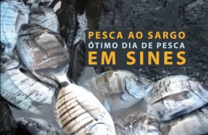 video-pesca-sargo-portugal-dicas
