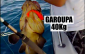 video-pesca-garoupa-brasil