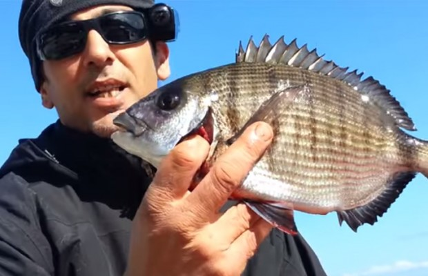 sargo-fundo-pesca-rockfishing-pedras-desportiva-pesca