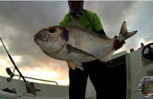 pesca dourada gigante