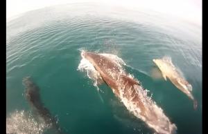 golfinhos acompanham barco