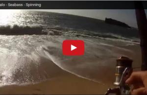 Robalo spinning borracha raglou pesca desportiva
