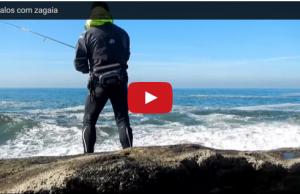 robalos com zagaia pesca desportiva