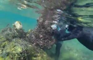 resgate tartaruga redes de pesca