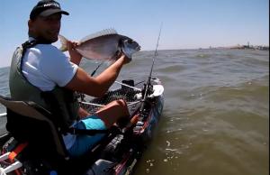 pesca desportiva dourada no tejo