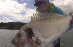 pesca desportiva embarcada dourada com navalha (lingueirão)
