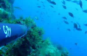 caca-submarina-pesca-2015-apneia