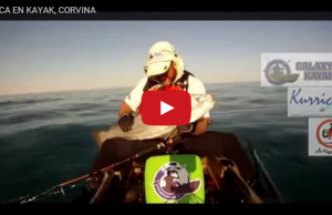 pesca corvina kayak