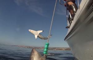 video-viral-tubarao-salto-pesca-desportiva