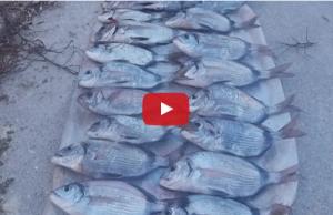 Pesca Embarcada - As 3 Gerações Domingues