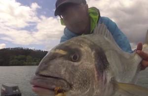 lingueirao-pescar-douradas-video-pesca-desportiva