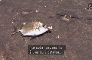 pesca-de-sargos-a-boia-com-guti-gonsalez
