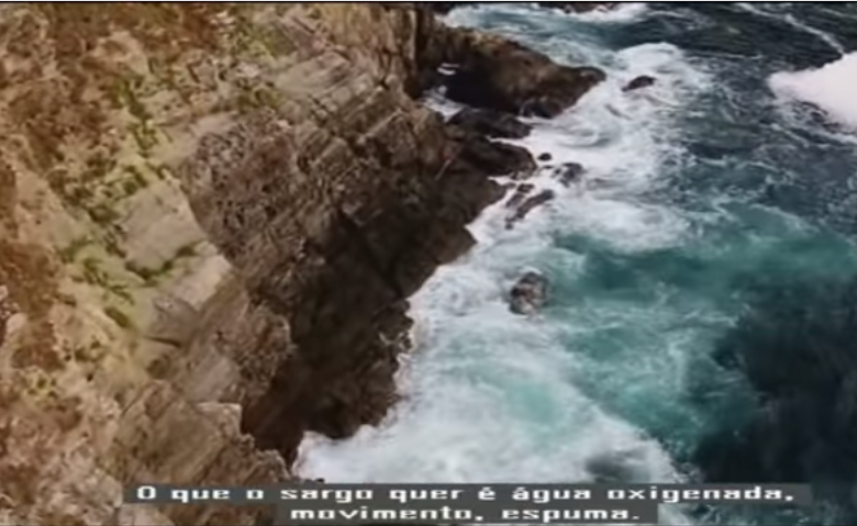 pesca-sargos-galiza