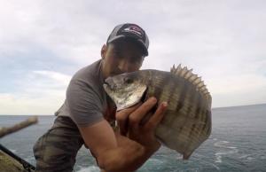 pesca sargos