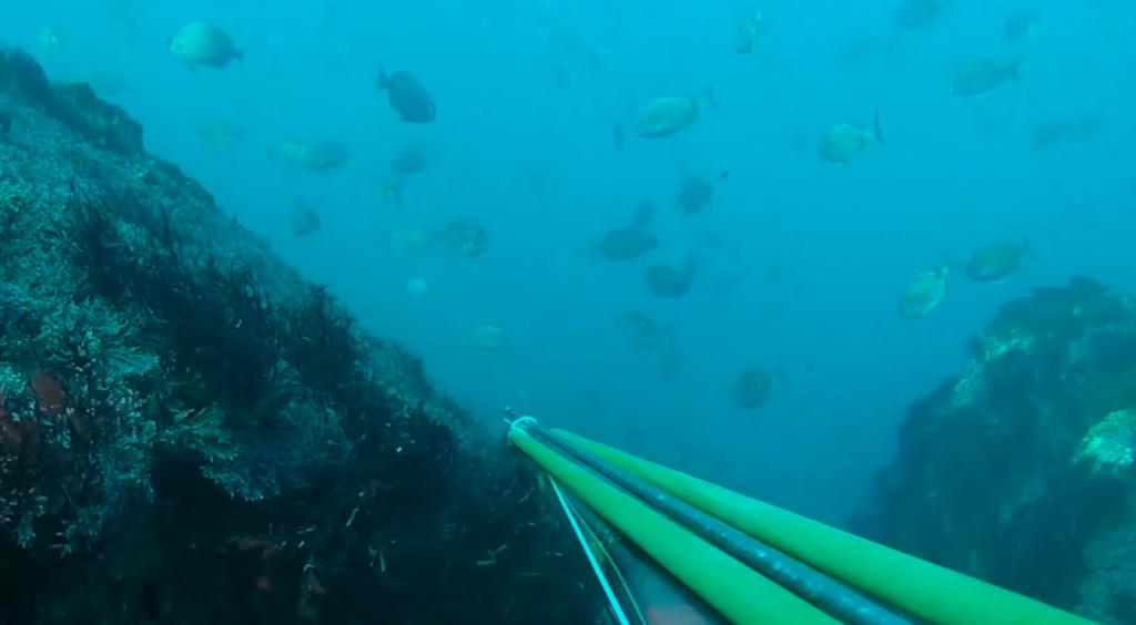 Pesca submarina robalo