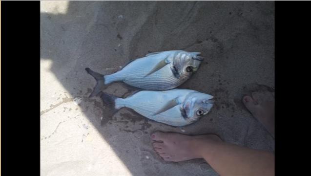 Pesca surfcasting – Algarve – À procura das douradas