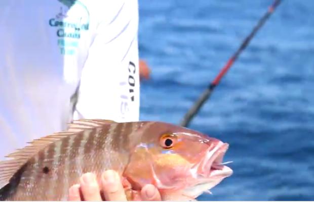 Pesca embarcada --- Varias capturas