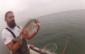 Douradas no Sado Pesca embarcada